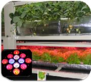low out LED grow lights